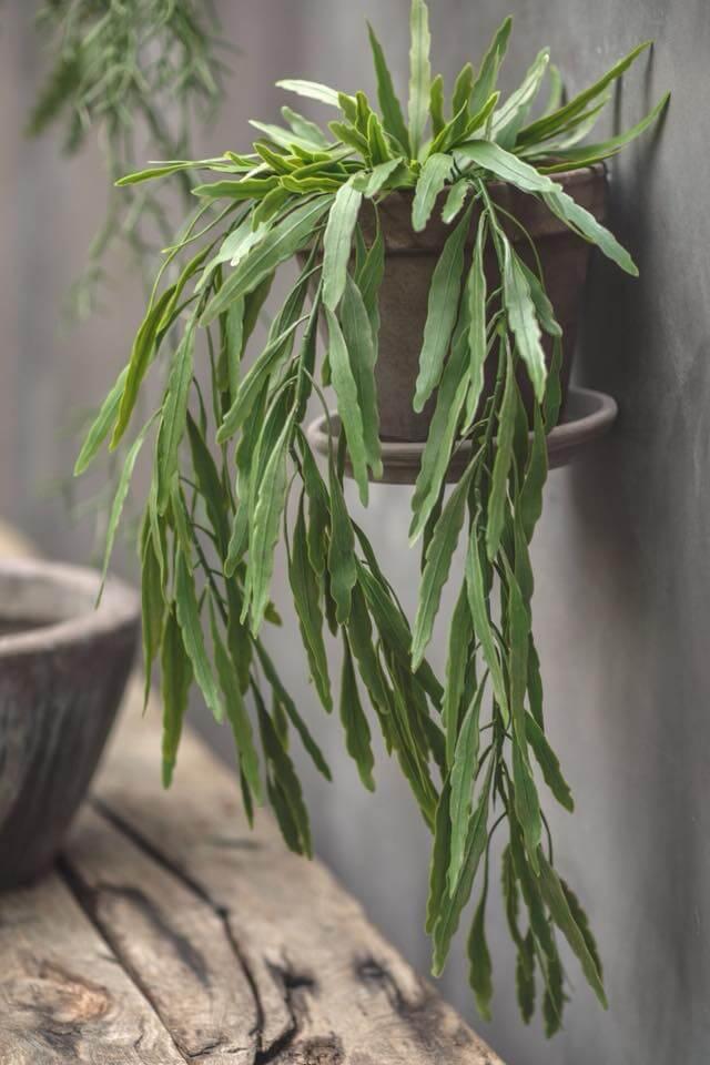 plantes décoration la Monarde